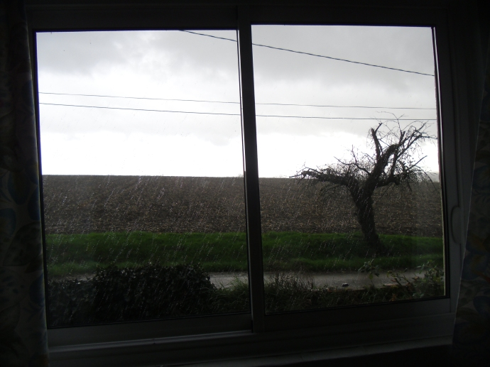 The view out my bedroom window.  Rain.