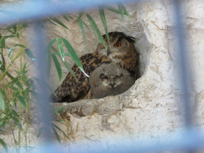 Mama owl and baby owl!