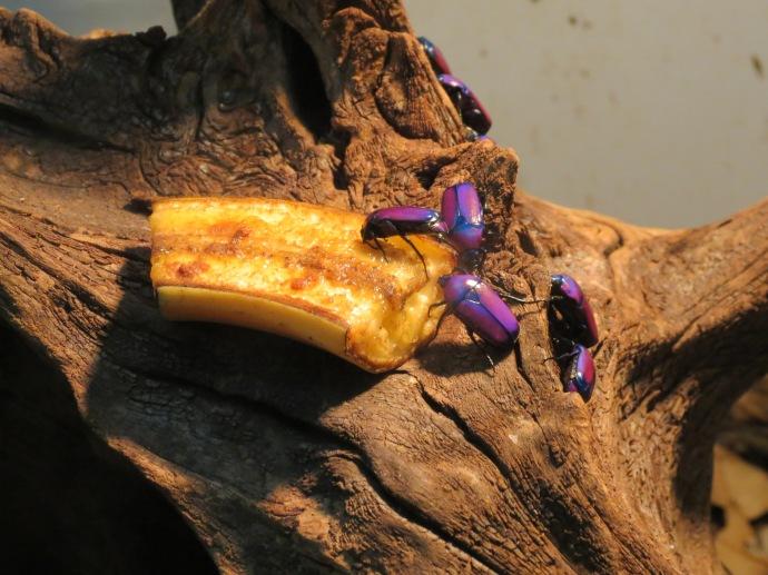 Beetles in my favorite color :)